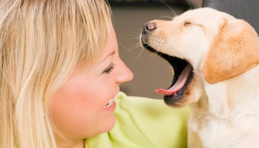 Alitosi del cane: perché il mio amico a 4 zampe ha l'alito cattivo?
