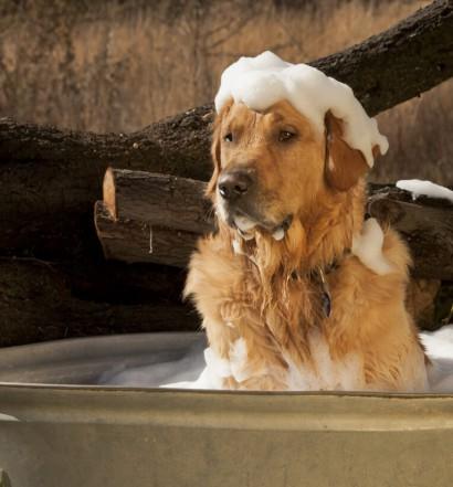 shampoo cani toelettatura