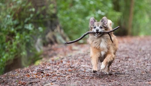 Le zecche: un pericolo per l'uomo e per gli animali
