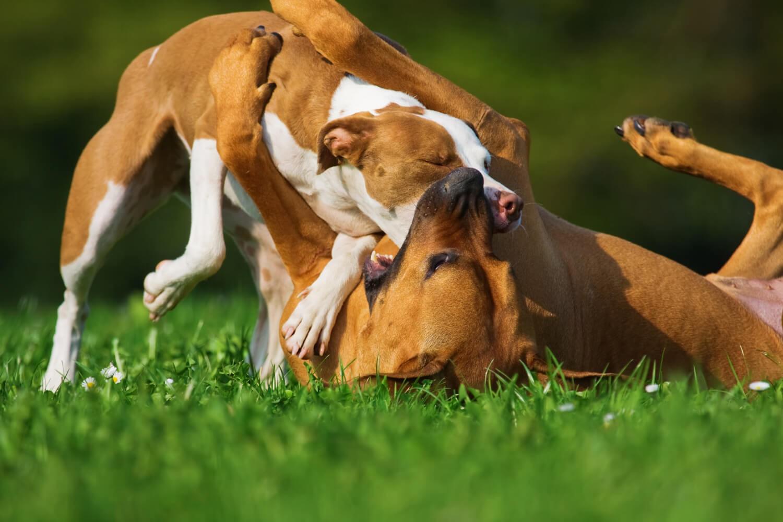 disinfettante cani