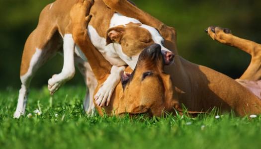 Disinfettante per cani: cosa fare se il vostro amico peloso si ferisce