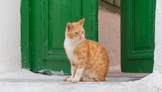 Cura del gatto: per quanto tempo può restare solo mentre sono in vacanza?