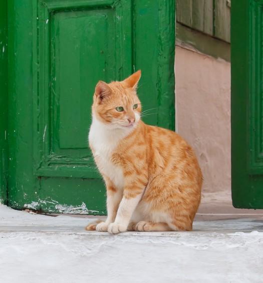 gatto solo in vacanza