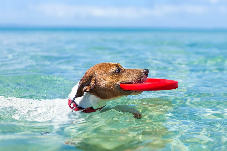 giochi d'acqua con il cane