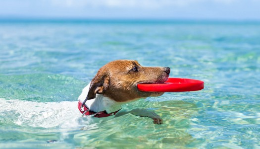 Giocare con il cane: i giochi d'acqua sono pericolosi o no?