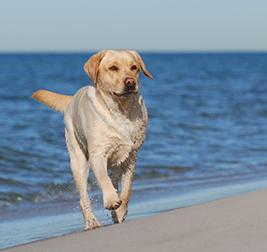 Giocare con il cane: giochi d'acqua