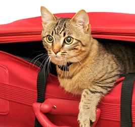 vacanza con il gatto: cosa portare