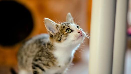 Integratori per gatti: quando il vostro gatto manca il bersaglio