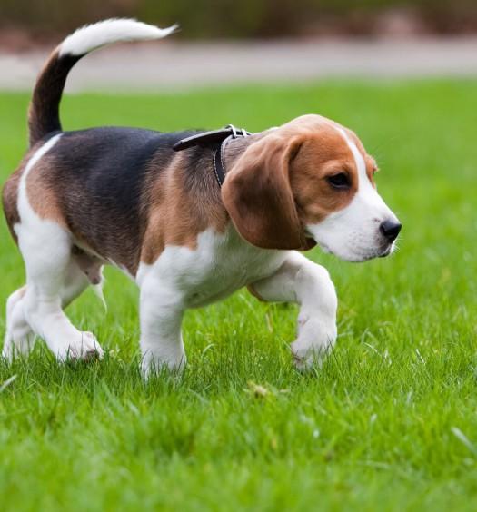 cane che zoppica