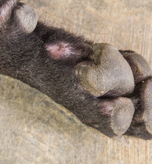 curare ferita cane