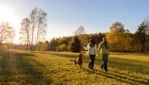 I 5 migliori parchi per passeggiare con il cane