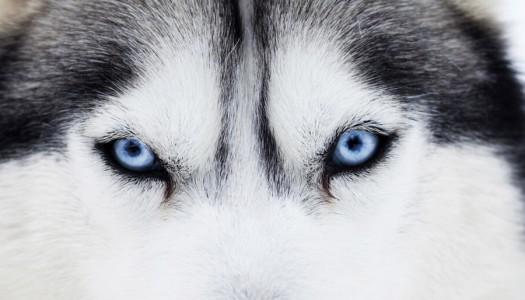 Pulire gli occhi al cane è importante per la sua salute!