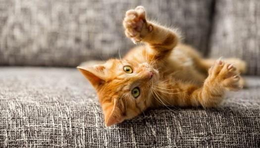 Gli artigli del gatto: a cosa servono?
