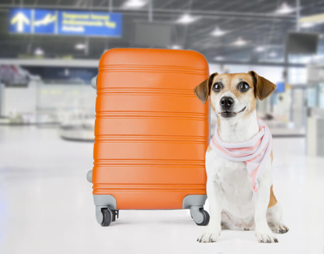 viaggiare con il cane in aereo