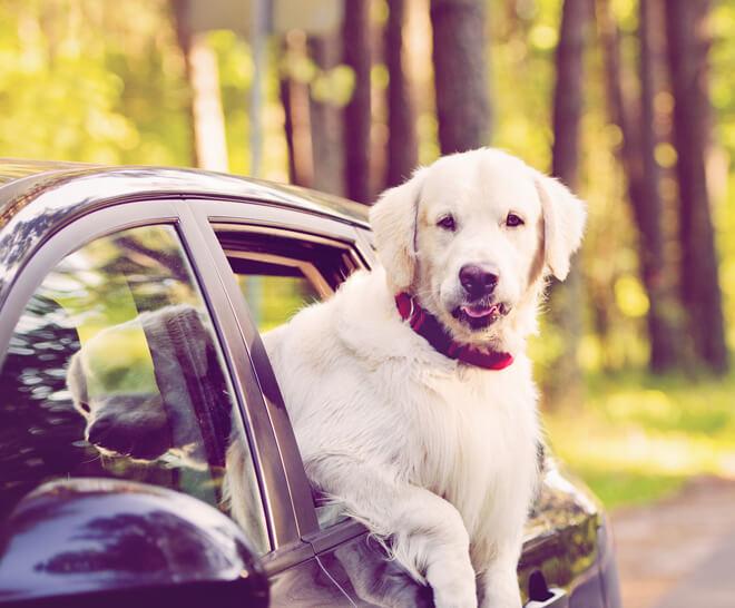 vacanza con il cane in macchina