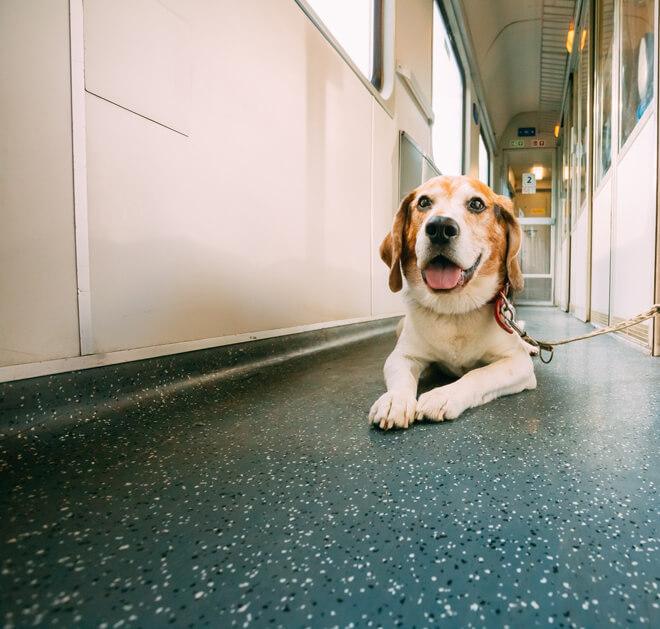vacanza con il cane in treno