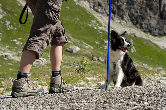 vacanza con il cane in montagna