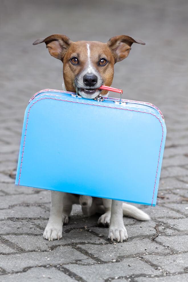la valigia del cane per andare in vacanza