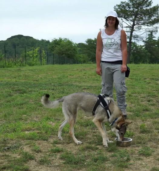 educare un cane: la ciotola