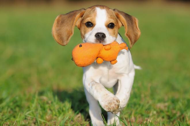educare cucciolo di cane con il gioco