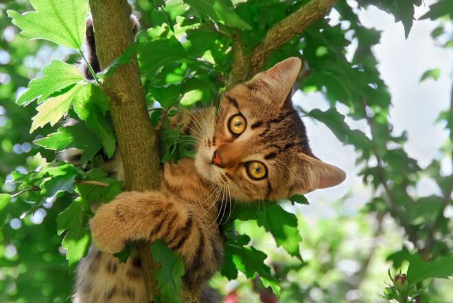 gatto si arrampica con le unghie
