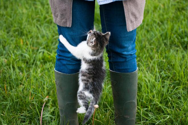 gatto che salta sulle gambe