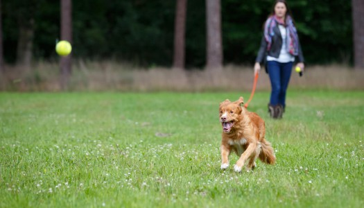Giochi per cani: imparare divertendosi!
