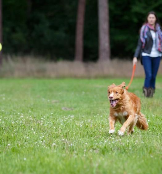 giochi per cani: imparare divertendosi