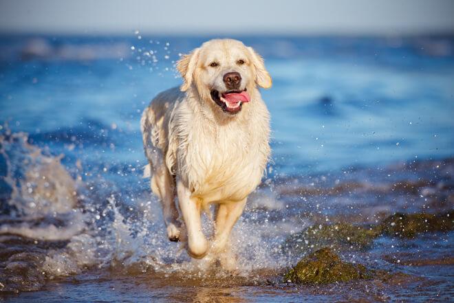 vacanza con il cane al mare