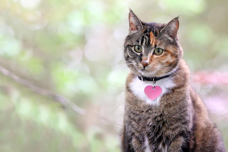 Nomi per gatti