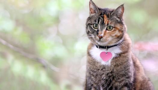 Nomi per gatti: consigli e idee per scegliere il nome del tuo gattino