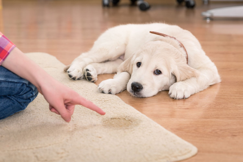come educare un cane a fare i bisogni fuori casa