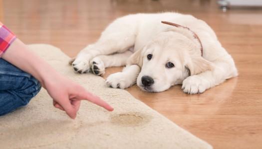 Come insegnare al cane a fare i bisogni fuori