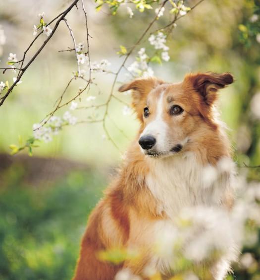 pulci del cane e del gatto in primavera