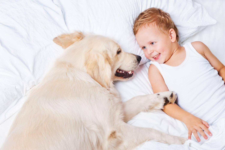 pulci in casa portate dal cane