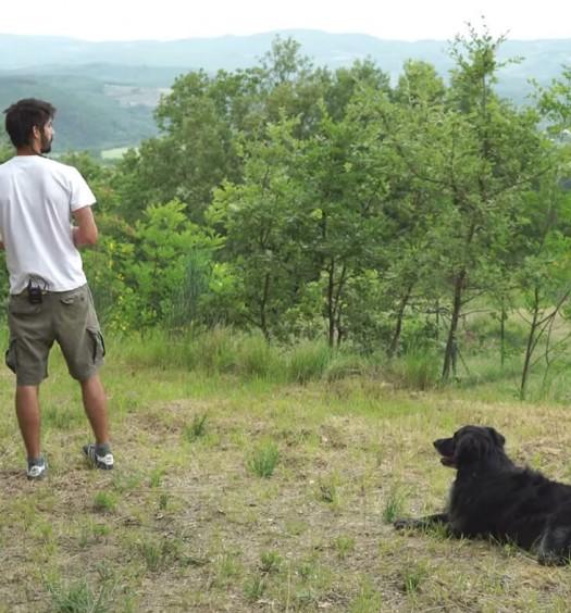 educare il cane: resta