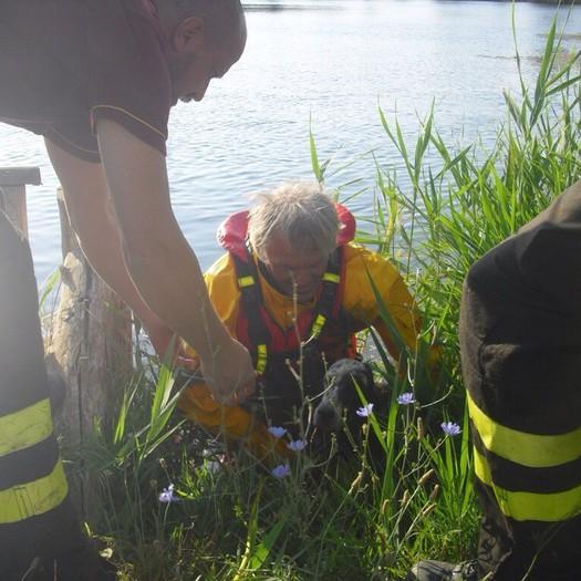 Vigile del fuoco salva cane nel laghetto
