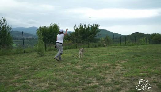 Educare il cane: Scambio e Lascia