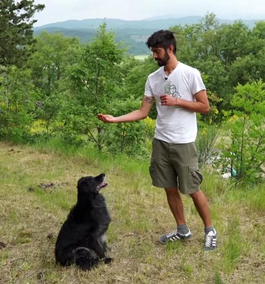 educare il cane - seduto