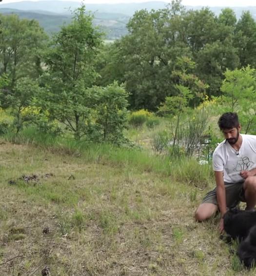 come educare il cane: terra