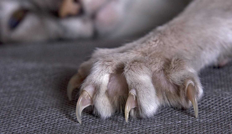 unghie-gatto (1)