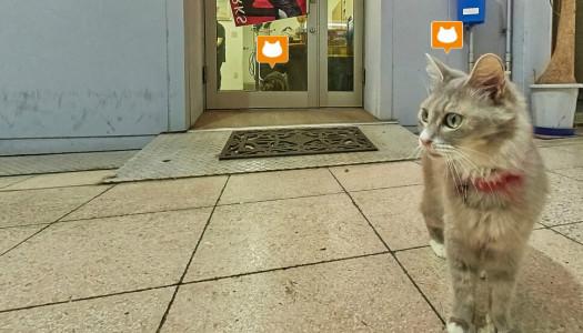 Dal Giappone arriva la Street View per gatti