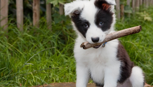 Cuccioli di cane: come prepararsi al loro arrivo