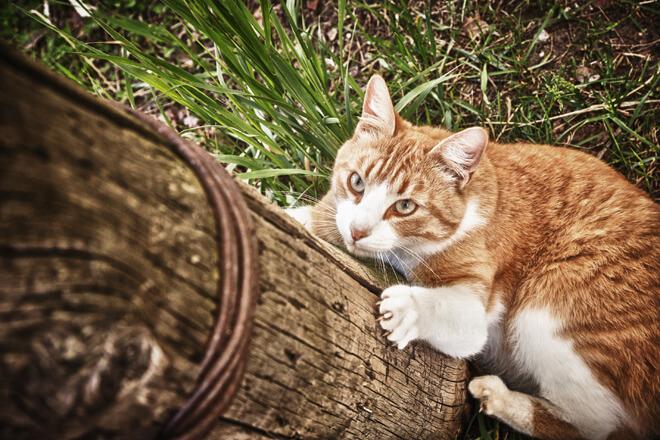 gatto si arrampica nel tronco