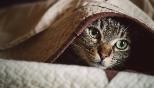 Perché i gatti amano nascondersi?