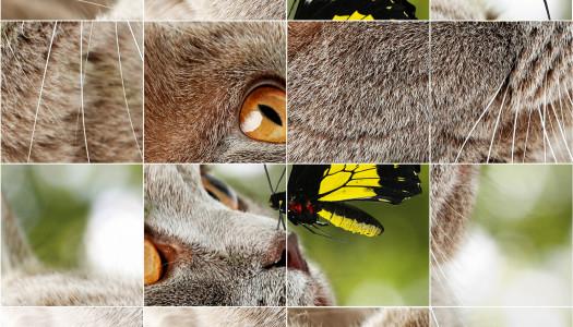 Puzzle gatti
