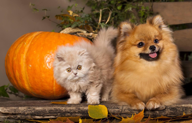 muta del cane e del gatto