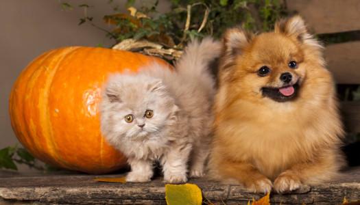 La muta del cane e del gatto