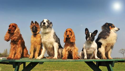 Quanto conosci le razze dei cani?