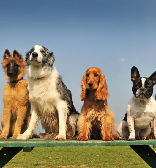 quiz-razze-cani